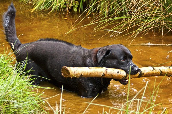 buster with log