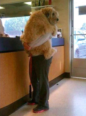 scared dog at vets